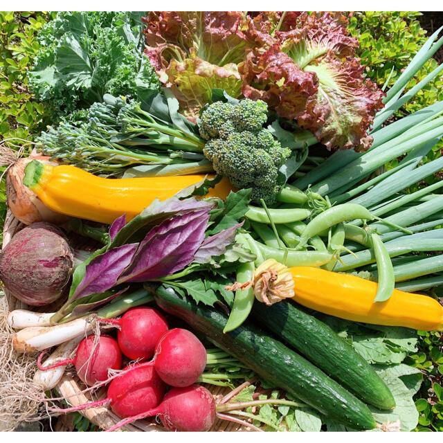 無農薬お野菜セット 60サイズ箱満杯つめ 食品/飲料/酒の食品(野菜)の商品写真