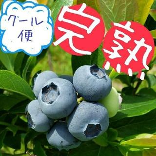 完熟ブルーベリー 900g (180g✕5パック)(フルーツ)