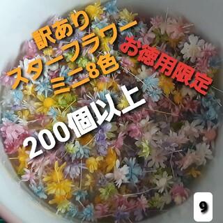 訳あり9スターフラワーミニ8色 200個以上(ドライフラワー)