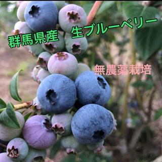 収穫朝摘み群馬県産 ブルーベリー 2キロ クール便(野菜)