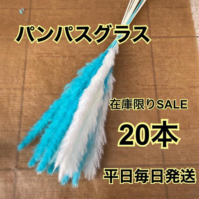 SALE スカイブルー&ホワイトパンパスグラス20本 ハンドメイドのフラワー/ガーデン(ドライフラワー)の商品写真