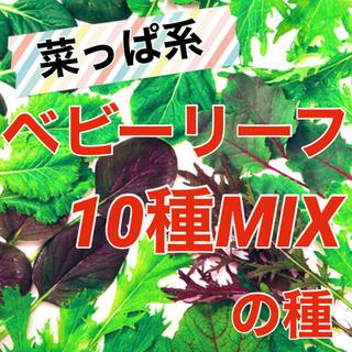 【簡単栽培‼️】ベビーリーフ菜っぱミックスの種 5ml 野菜 家庭菜園 タネ(野菜)
