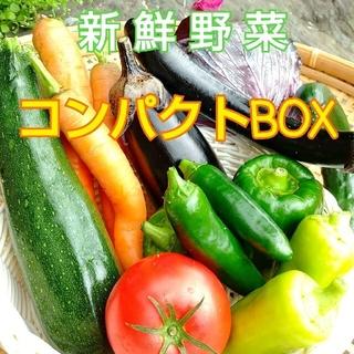 新鮮朝採り【畑〜直送便】 コンパクトBOXでお届け♪  農薬不使用(野菜)