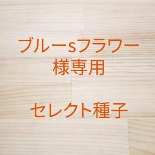 ブルーsフラワー様専用 セレクト種子 2袋(野菜)