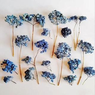 紫陽花 アジサイ ドライフラワー ブルー あじさい 花材 20個 枝付き ヘッド(ドライフラワー)