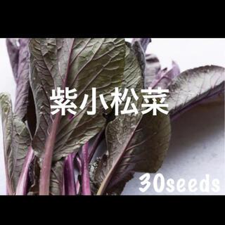 レア! まき時! 紫小松菜 種30粒(野菜)