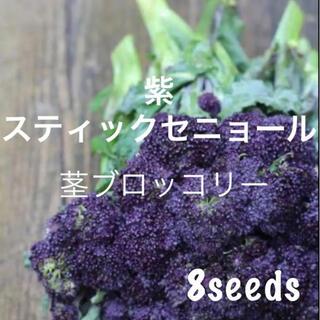 激レア! まき時! 紫の茎ブロッコリー 紫スティックセニョール 種8粒(野菜)