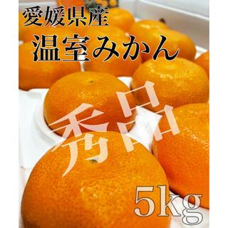 お待たせしました!愛媛県産【ハウスみかん】青秀品 2L 30玉  5kg(フルーツ)