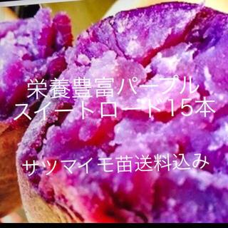 パープルスイートロード(紫芋苗)15本(野菜)