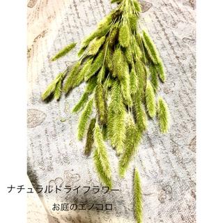 ナチュラルドライフラワー 初夏のガーデン エノコロ ①(ドライフラワー)