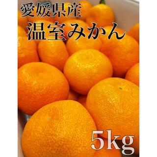 ついに入荷!!愛媛県産【ハウスみかん】Lサイズ 38玉前後  5kg!(フルーツ)