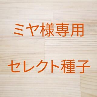 ミヤ様専用 セレクト種子 10袋(野菜)