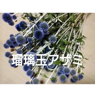 rinさま専用 瑠璃玉アザミ   50玉20~30m(ドライフラワー)
