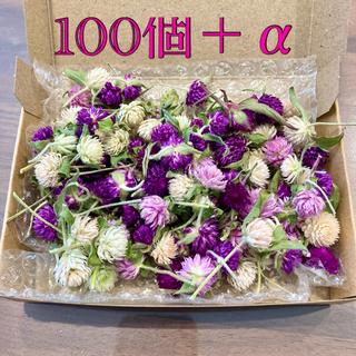 千日紅100個+α【若干茎あり・葉付き】ドライフラワー(ドライフラワー)