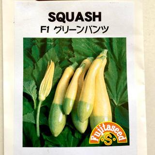 野菜の種 F1 グリーンパンツ(野菜)