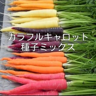 カラフルキャロット種子 8種ミックス(野菜)