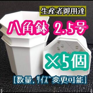 八角鉢 (白) 2.5号 ◎5個◎ 2.5寸 シャトル鉢 ホワイト(その他)