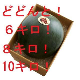 どとんと!6キロ!8キロ!10キロ!「ブラックジャック」(フルーツ)