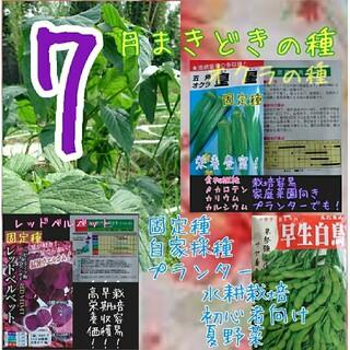 7月まきどきの種 野菜の種 ハーブの種 家庭菜園 水耕栽培 種子 種(野菜)