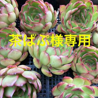 茶ぱぷ様専用(その他)