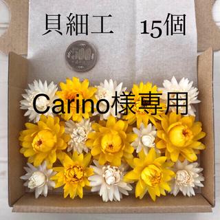 Carino様専用(10)オレガノケントビューティーと(11)貝細工のセット(ドライフラワー)