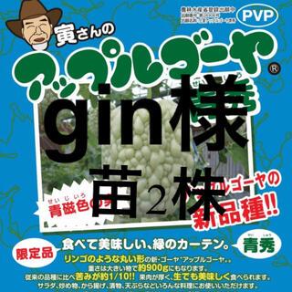 63061【青1緑1】上里岡村農園寅さんのアップルゴーヤの苗2株(野菜)