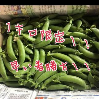 スナップエンドウ 1キロ(野菜)
