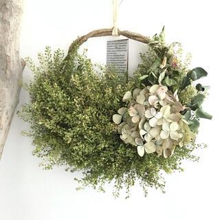 ふんわりグリーン♪バージニアペッパーウィード×紫陽花のドライフラワーリース(ドライフラワー)