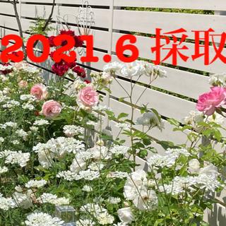 オルレア種子+ニゲラ種子+おまけ(その他)