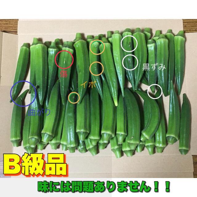 訳あり 沖縄県産 オクラ 50本 食品/飲料/酒の食品(野菜)の商品写真