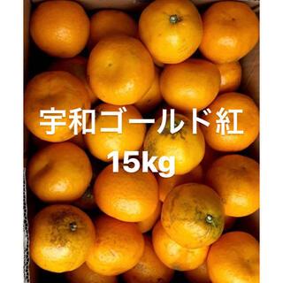 愛媛県 宇和ゴールド紅 河内晩柑 15kg(フルーツ)