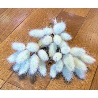 銀の紫陽花が作ったふわっふわで可愛いラグラスのドライフラワー30本‼️(ドライフラワー)