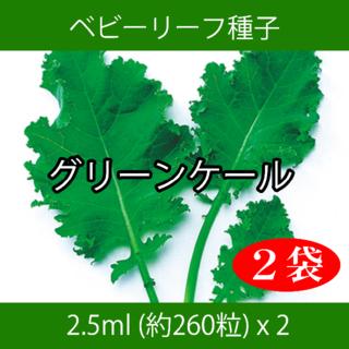 ベビーリーフ種子 B-34 グリーンケール 2.5ml 約260粒 x 2袋(野菜)