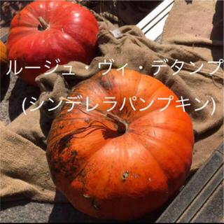【種子】ルージュ・ヴィ・デタンプ シンデレラパンプキン 種子7粒 おまけつき(その他)