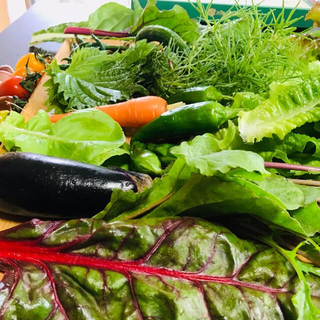 ポパイ畑☆お野菜お米セット7/4(日)発送*(•ᴥ•)*ネコポス 食品/飲料/酒の食品(野菜)の商品写真