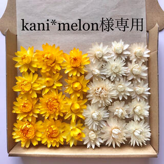 kani*melon様専用 貝細工 ドライフラワー(ドライフラワー)
