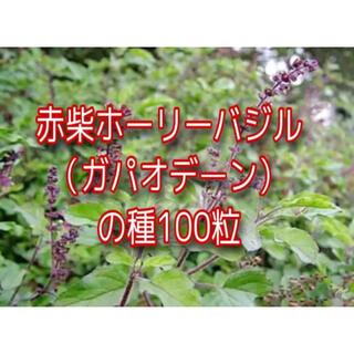 レッドホーリーバジルの種100粒(プランター)