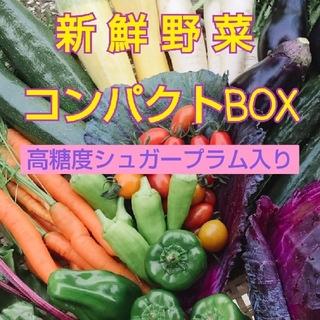 新鮮野菜  畑〜直送便  高糖度シュガープラム入り  コンパクトBOX(野菜)