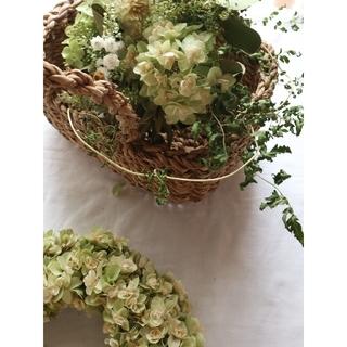 柏葉紫陽花とアナベルのグリーンスワッグ。紫陽花スワッグ。ドライフラワースワッグ(ドライフラワー)