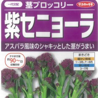 野菜種 紫セニョーラ 茎ブロックリー 種7粒(野菜)