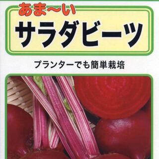 秋の家庭菜園・葉酸たっぷりのビーツを育てよう 野菜種10個(野菜)