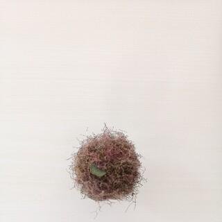 スモークツリーボール③(ドライフラワー)