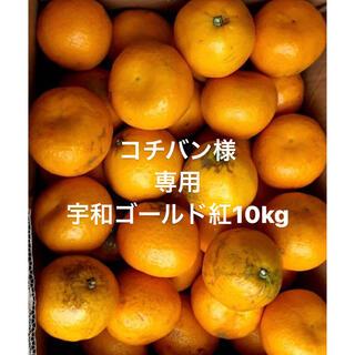 コチバン様 専用 愛媛県 宇和ゴールド紅 河内晩柑 10kg(フルーツ)
