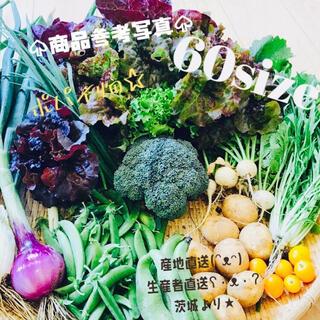 ポパイ畑☆野菜詰め合わせ7/4(日)発送*(•ᴥ•)*60size(野菜)