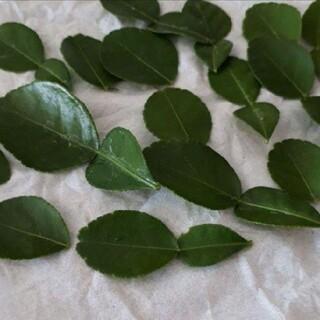 コブミカンの生葉 10~12枚(野菜)