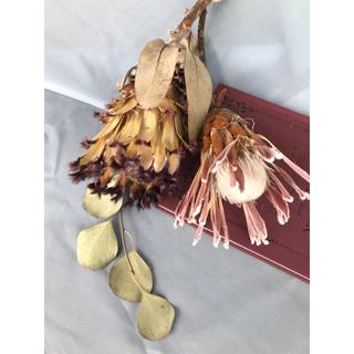 花材 プロテア  カーニバルとスノープリンセス ドライフラワー(ドライフラワー)