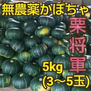 無農薬かぼちゃ(栗将軍)5kg熊本県産(野菜)