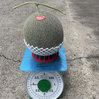 メガ玉!!3キロ以上!肥後グリーンメロン(フルーツ)