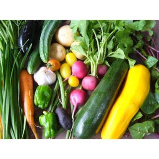 野菜詰め合わせ 60サイズ 農薬・化学肥料不使用(野菜)