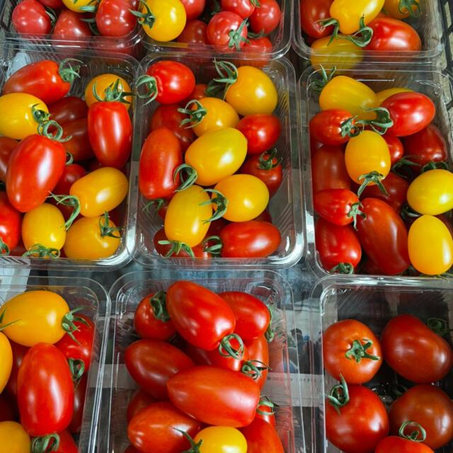 7月5日限定‼️アイコ食べ比べセット‼️ 食品/飲料/酒の食品(野菜)の商品写真